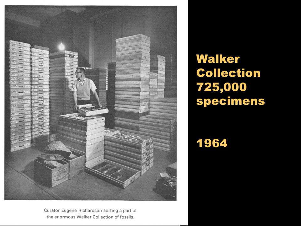 Walker Collection 725,000 specimens 1964