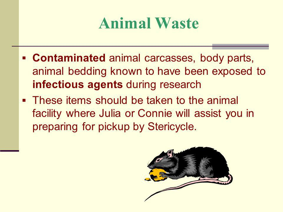 Animal Waste Contaminated animal carcasses, body parts, animal bedding known to have been exposed to infectious agents during research These items sho