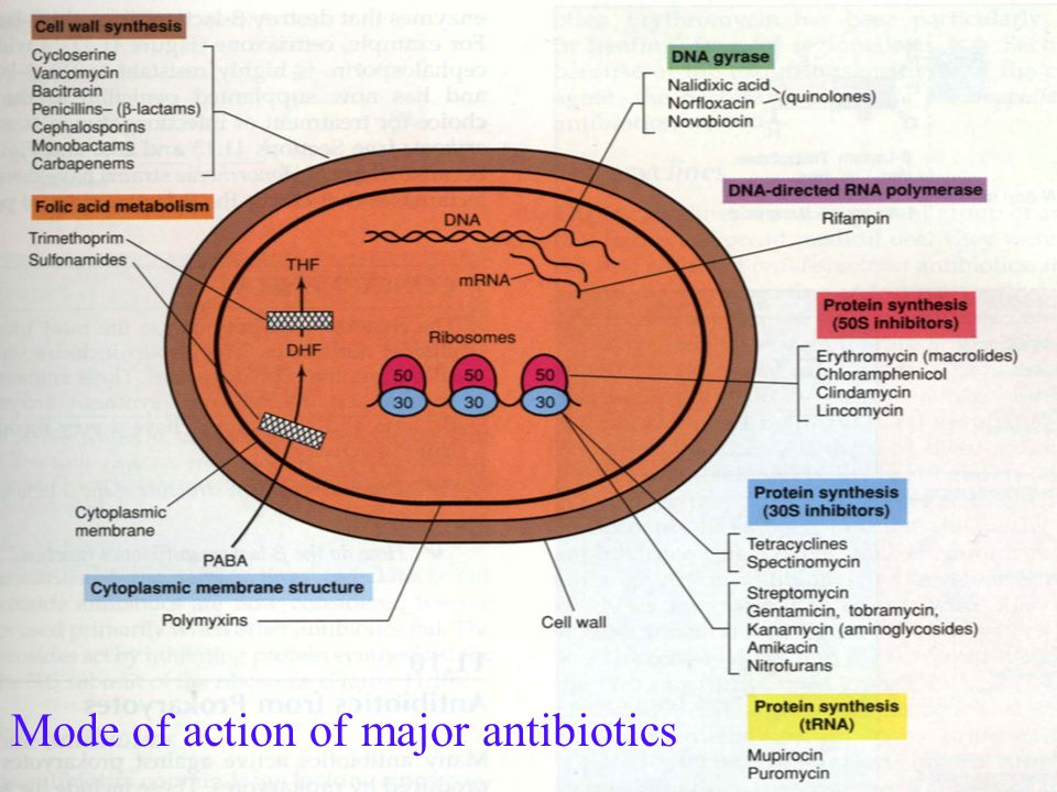 Range of actions of antibiotics and other agents