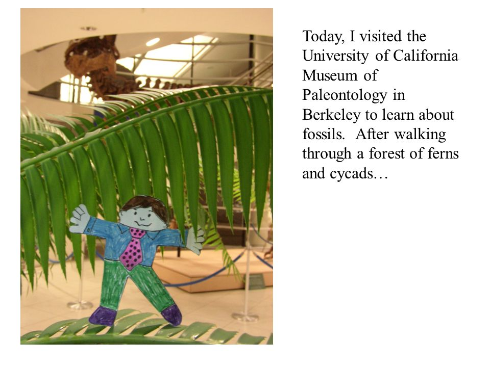 Today, I visited the University of California Museum of Paleontology in Berkeley to learn about fossils. After walking through a forest of ferns and c