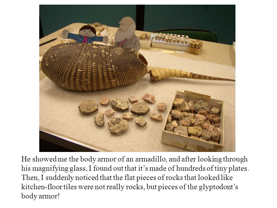 He showed me the body armor of an armadillo, and after looking through his magnifying glass, I found out that its made of hundreds of tiny plates. The