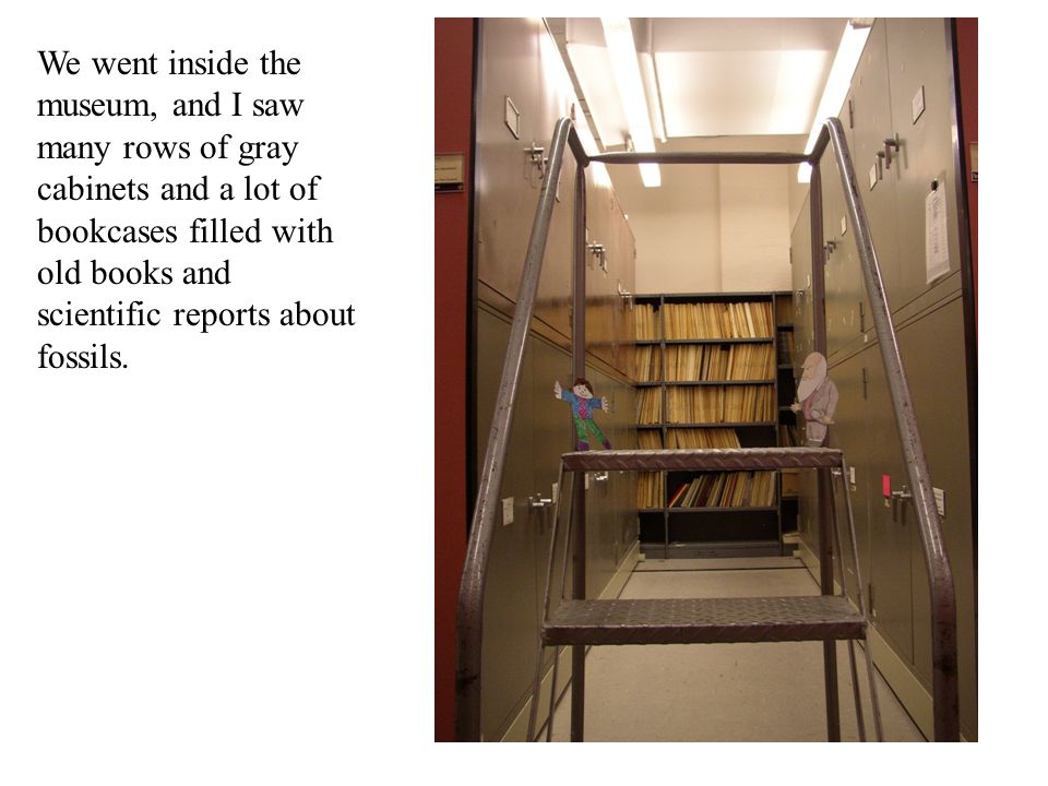 We went inside the museum, and I saw many rows of gray cabinets and a lot of bookcases filled with old books and scientific reports about fossils.