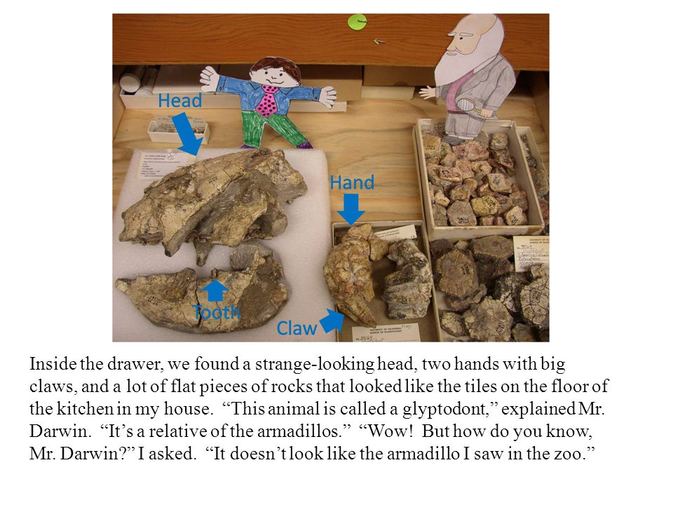 Inside the drawer, we found a strange-looking head, two hands with big claws, and a lot of flat pieces of rocks that looked like the tiles on the floo