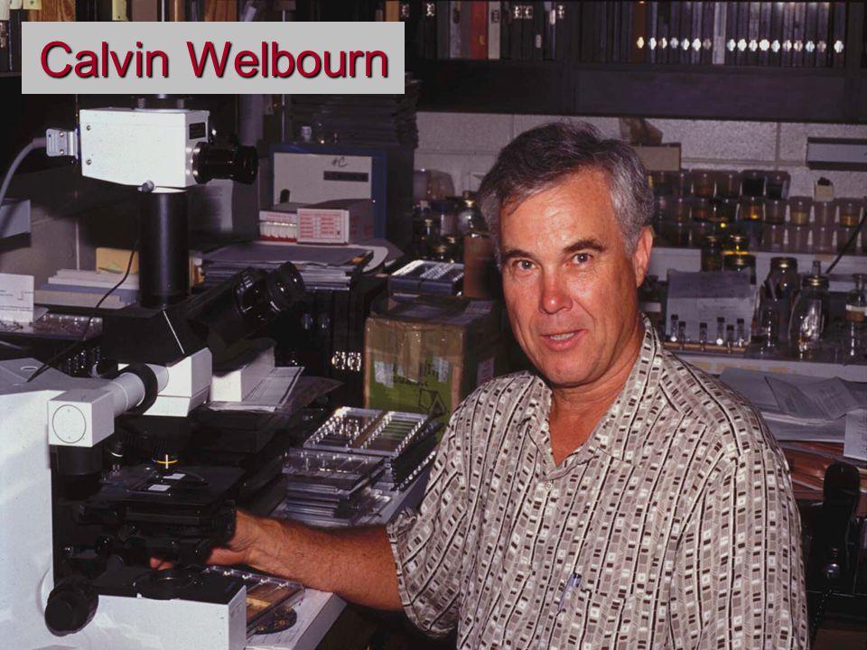 Calvin Welbourn