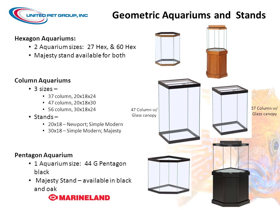 Geometric Aquariums and Stands Hexagon Aquariums: 2 Aquarium sizes: 27 Hex, & 60 Hex Majesty stand available for both Column Aquariums 3 sizes – 37 column, 20x18x24 47 column, 20x18x30 56 column, 30x18x24 Stands – 20x18 – Newport; Simple Modern 30x18 – Simple Modern; Majesty Pentagon Aquarium 1 Aquarium size: 44 G Pentagon black Majesty Stand – available in black and oak 37 Column w/ Glass canopy 47 Column w/ Glass canopy