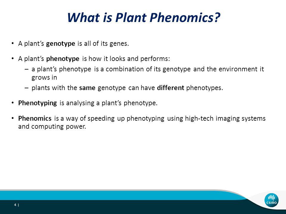 What does plant phenomics involve.