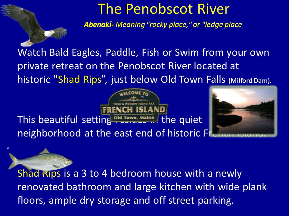 The Penobscot River Watch Bald Eagles, Paddle, Fish or Swim from your own private retreat on the Penobscot River located at historic