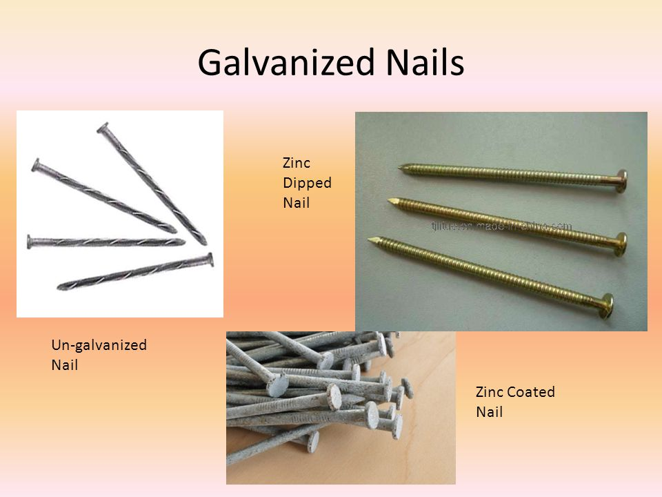 Galvanized Nails Un-galvanized Nail Zinc Dipped Nail Zinc Coated Nail