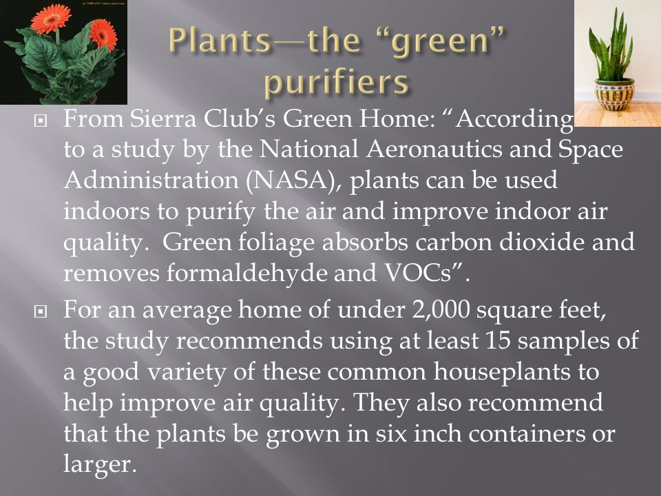 From Sierra Clubs Green Home: According to a study by the National Aeronautics and Space Administration (NASA), plants can be used indoors to purify the air and improve indoor air quality.