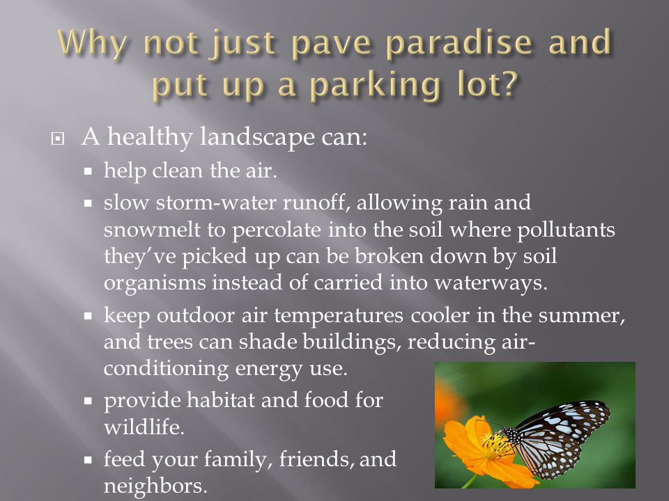 A healthy landscape can: help clean the air.