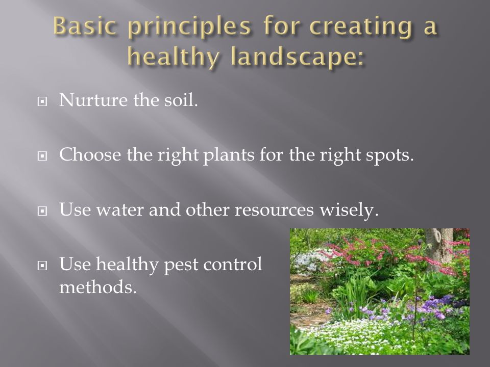 Nurture the soil.Choose the right plants for the right spots.