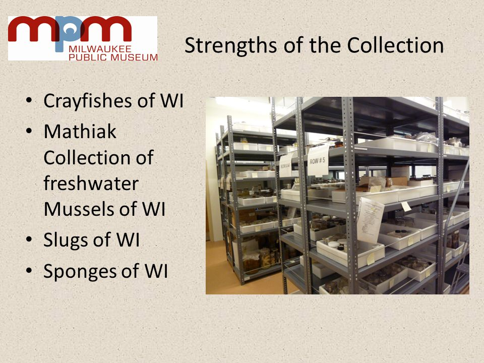 Strengths of the Collection Crayfishes of WI Mathiak Collection of freshwater Mussels of WI Slugs of WI Sponges of WI