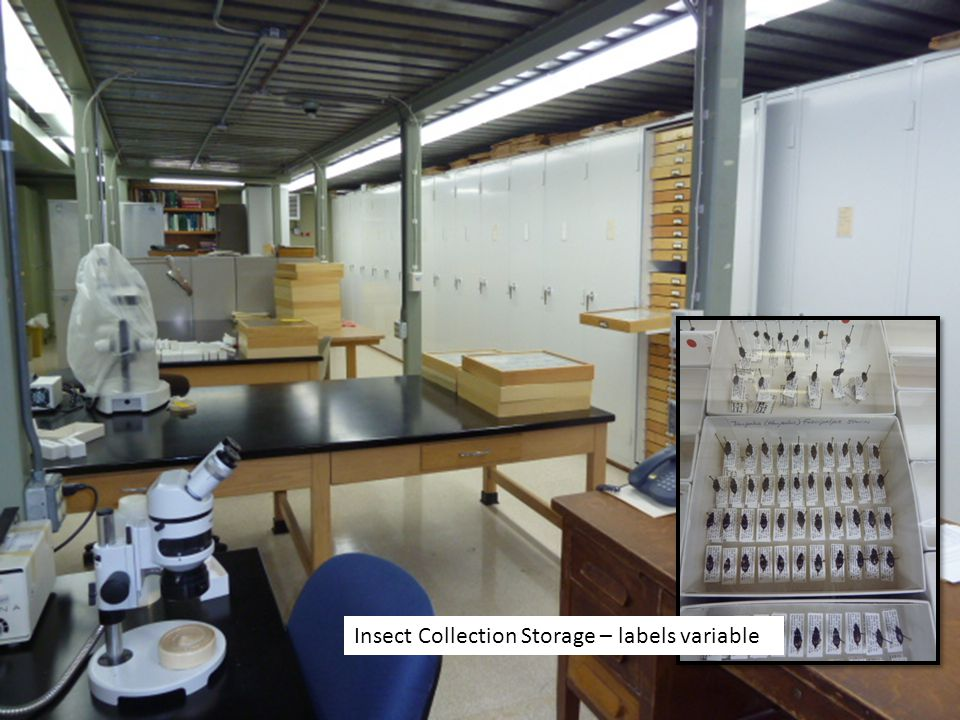 Insect Collection Storage – labels variable