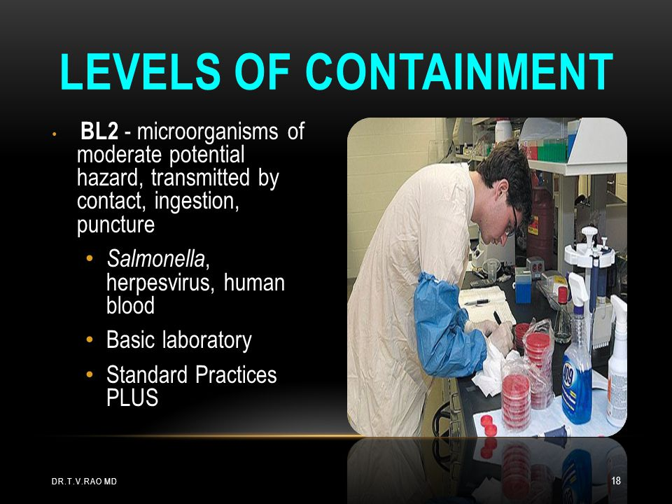 BL2 - microorganisms of moderate potential hazard, transmitted by contact, ingestion, puncture Salmonella, herpesvirus, human blood Basic laboratory S