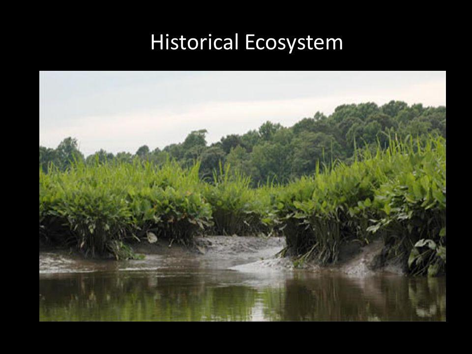 Historical Ecosystem