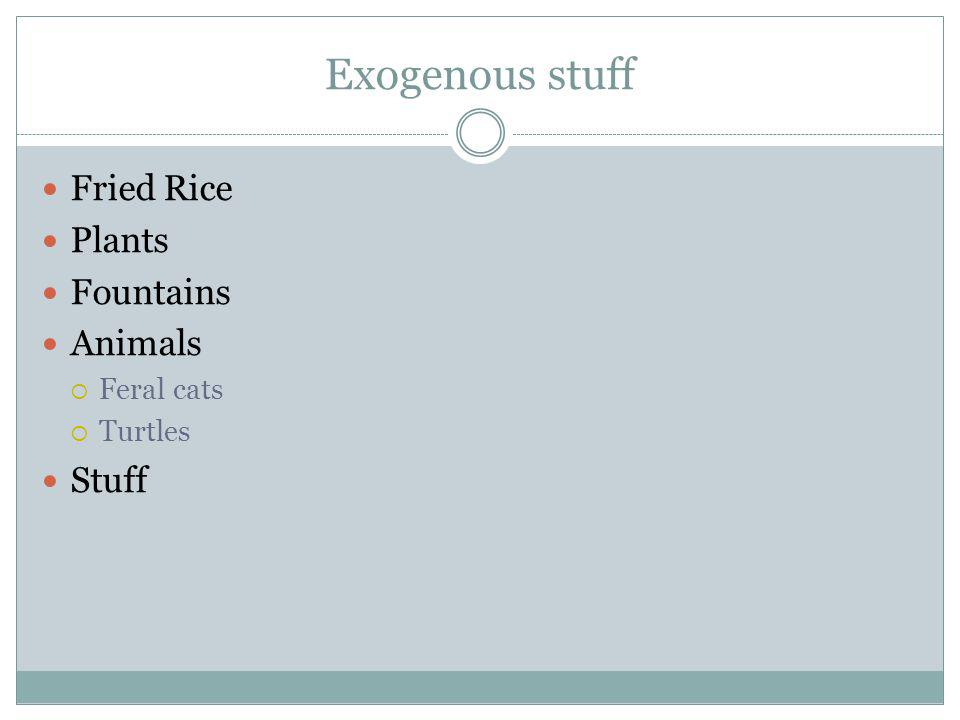 Exogenous stuff Fried Rice Plants Fountains Animals Feral cats Turtles Stuff