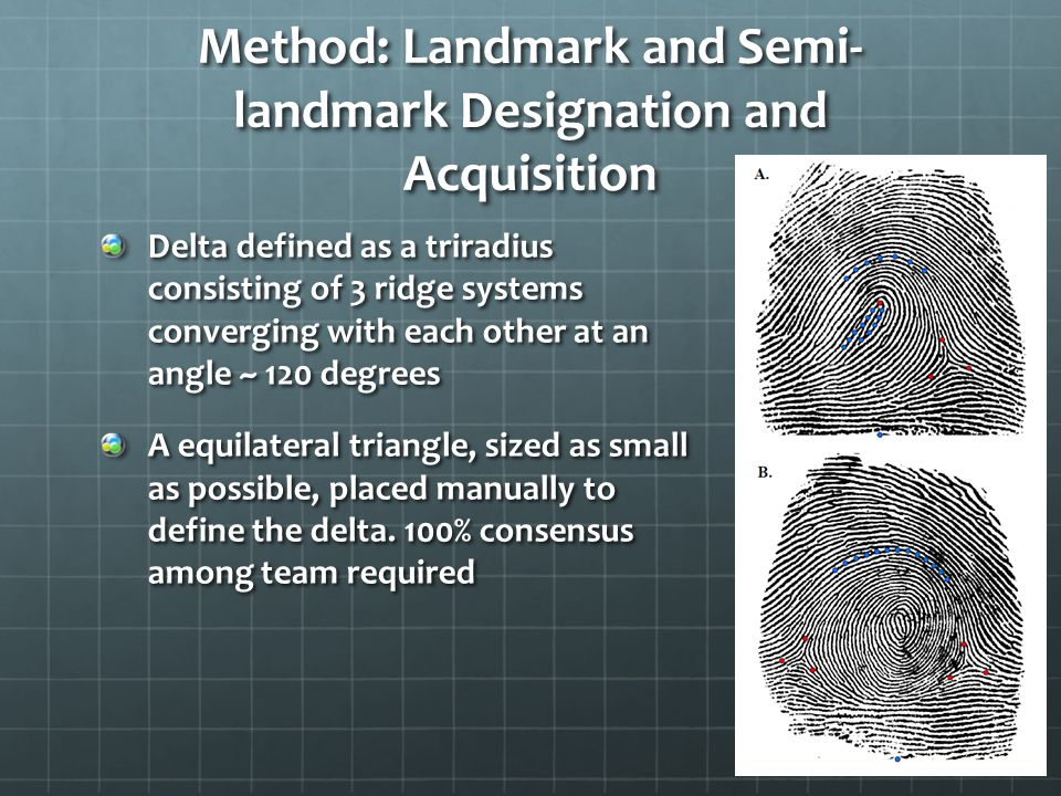 Method: Landmark and Semi- landmark Designation and Acquisition Delta defined as a triradius consisting of 3 ridge systems converging with each other