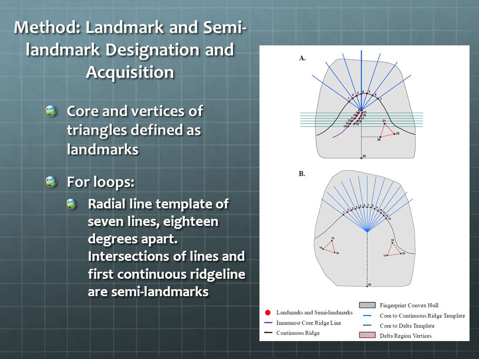 Method: Landmark and Semi- landmark Designation and Acquisition Core and vertices of triangles defined as landmarks For loops: Radial line template of seven lines, eighteen degrees apart.