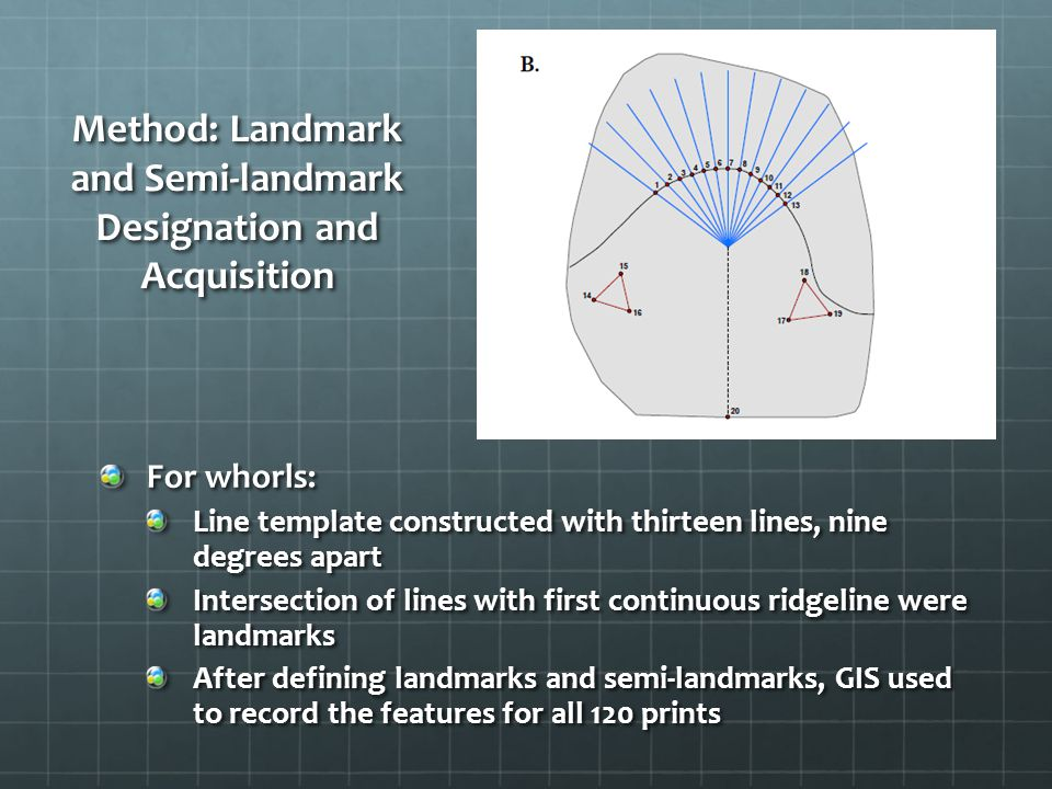For whorls: Line template constructed with thirteen lines, nine degrees apart Intersection of lines with first continuous ridgeline were landmarks After defining landmarks and semi-landmarks, GIS used to record the features for all 120 prints Method: Landmark and Semi-landmark Designation and Acquisition