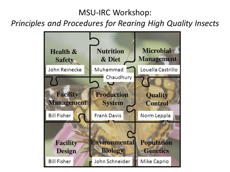 MSU-IRC Workshop: Principles and Procedures for Rearing High Quality Insects John ReineckeLouella Castrillo Bill FisherFrank DavisNorm Leppla Bill Fis
