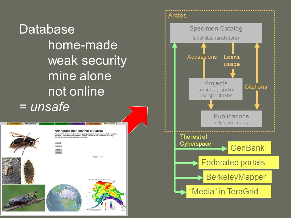 Database home-made weak security mine alone not online = unsafe Arctos Specimen Catalog label data (and more) Projects contribute and/or use specimens Accessions Loans, usage Publications cite specimens GenBank Federated portals BerkeleyMapper Media in TeraGrid The rest of Cyberspace Citations