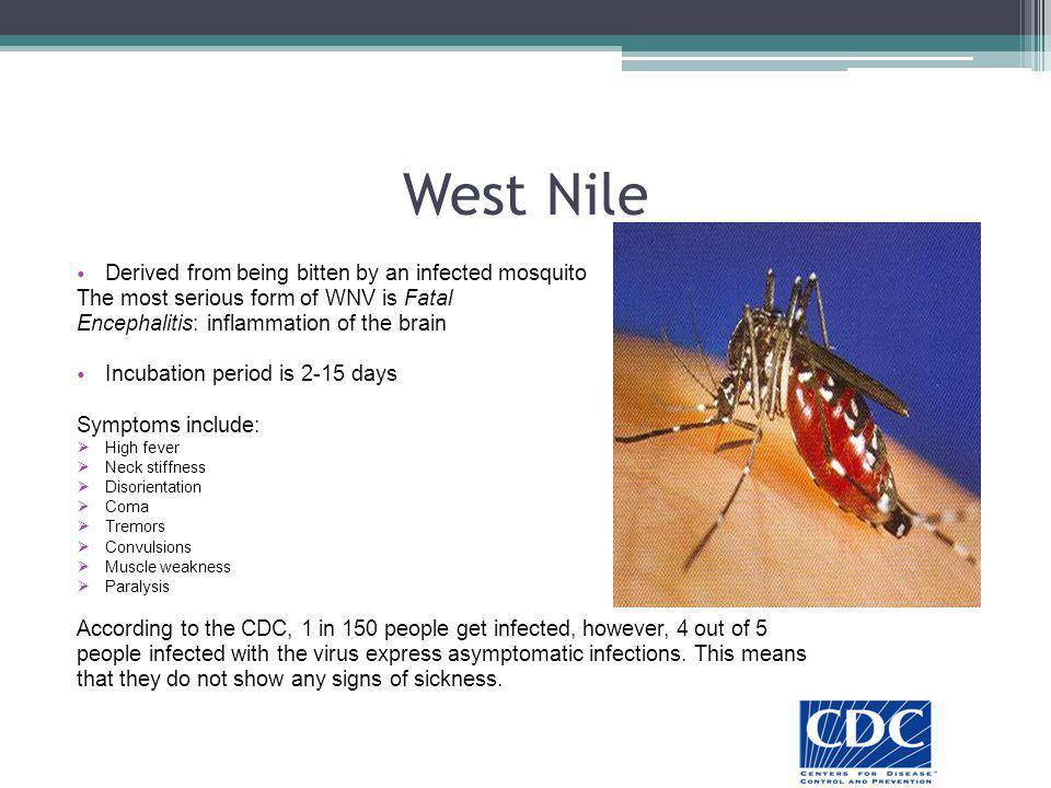 West Nile Derived from being bitten by an infected mosquito The most serious form of WNV is Fatal Encephalitis: inflammation of the brain Incubation p
