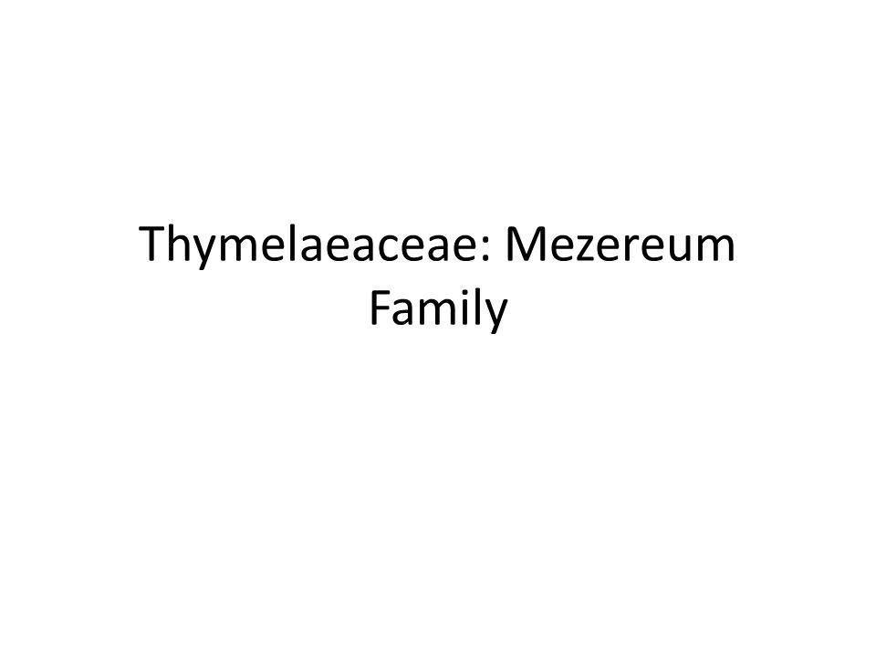 Thymelaeaceae: Mezereum Family