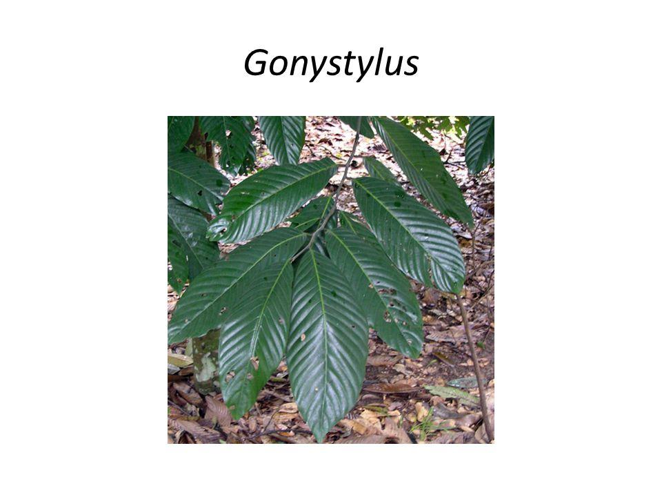 Gonystylus
