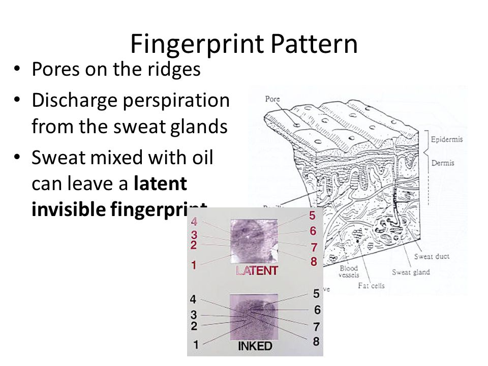 Principle 2 Fingerprints have general ridge patterns that permit them to be systematically classified