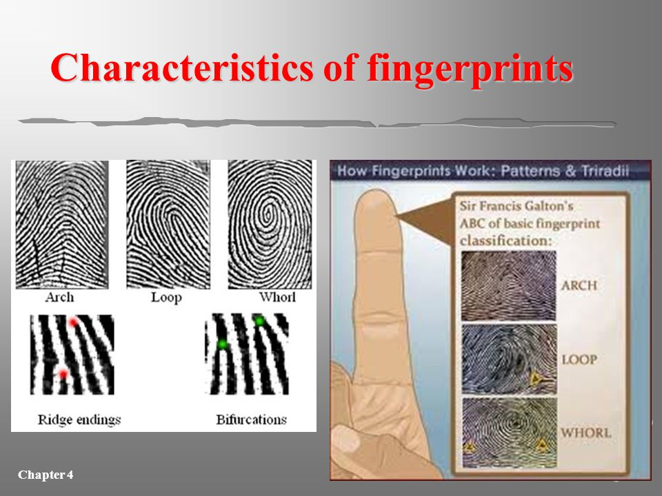 Chapter 4 Friday 11/15/13 AIM: how are fingerprints identified? DO NOW: List the three major characteristics used to identify fingerprints. Explain wh