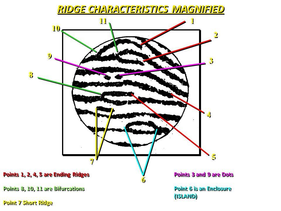 Fingerprint Basics (minutiae) 54 Ridge crossing trifurcation Opposed bifurcation/ridge ending) Bridge