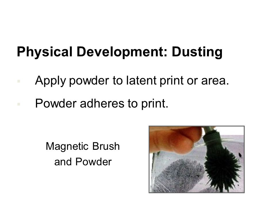 Physical Development: Dusting Apply powder to latent print or area. Powder adheres to print. Brush and Powder