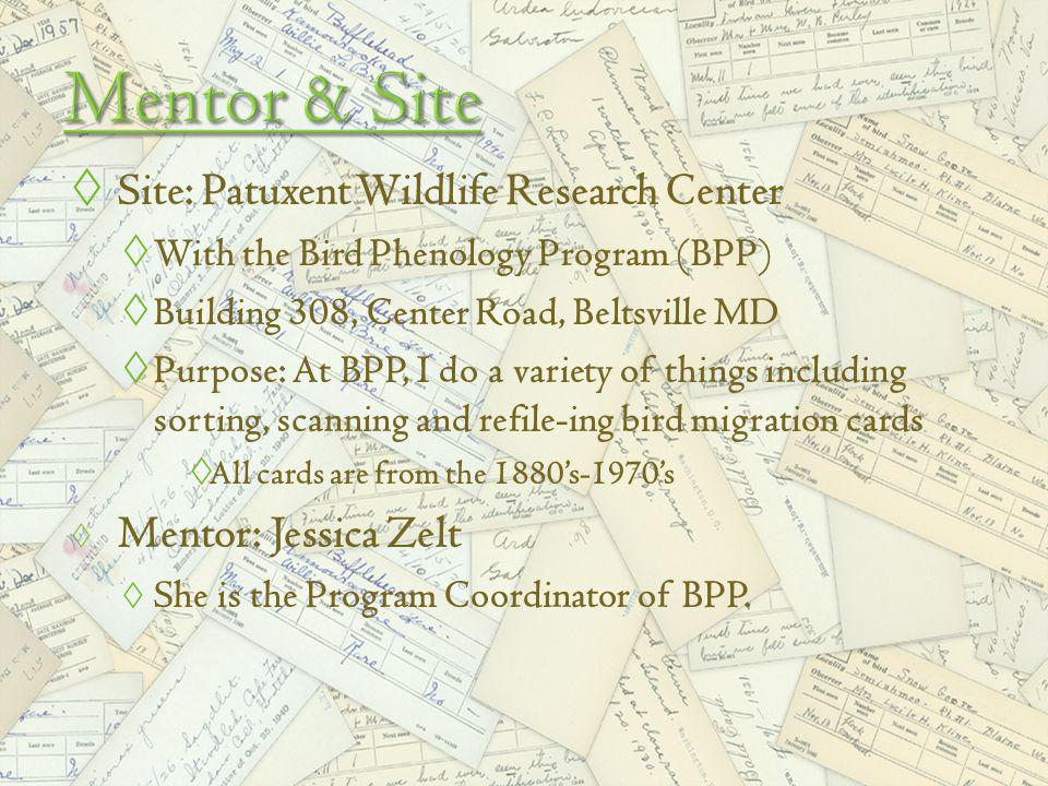 Site: Patuxent Wildlife Research Center With the Bird Phenology Program (BPP) Building 308, Center Road, Beltsville MD Purpose: At BPP, I do a variety of things including sorting, scanning and refile-ing bird migration cards All cards are from the 1880s-1970s Mentor: Jessica Zelt She is the Program Coordinator of BPP.