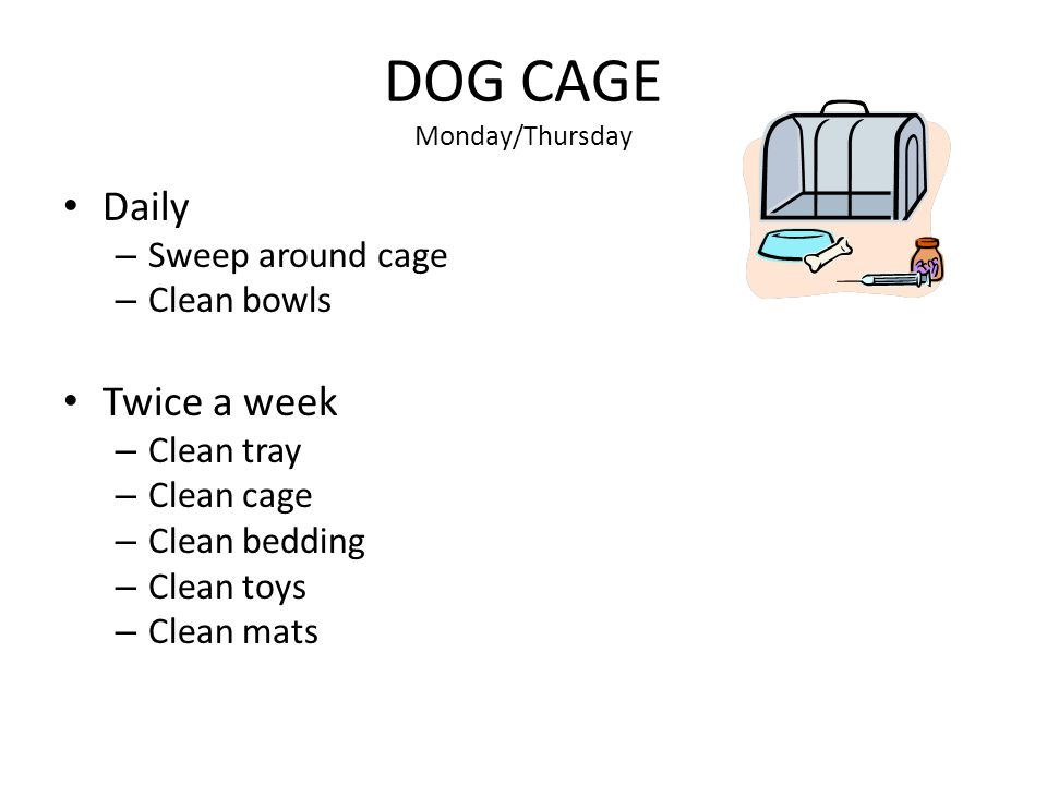 DOG CAGE Monday/Thursday Daily – Sweep around cage – Clean bowls Twice a week – Clean tray – Clean cage – Clean bedding – Clean toys – Clean mats