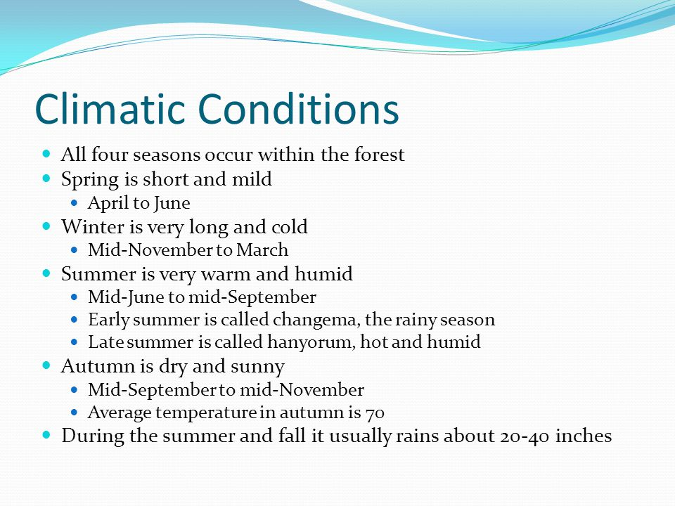 Climatic Conditions All four seasons occur within the forest Spring is short and mild April to June Winter is very long and cold Mid-November to March Summer is very warm and humid Mid-June to mid-September Early summer is called changema, the rainy season Late summer is called hanyorum, hot and humid Autumn is dry and sunny Mid-September to mid-November Average temperature in autumn is 70 During the summer and fall it usually rains about inches
