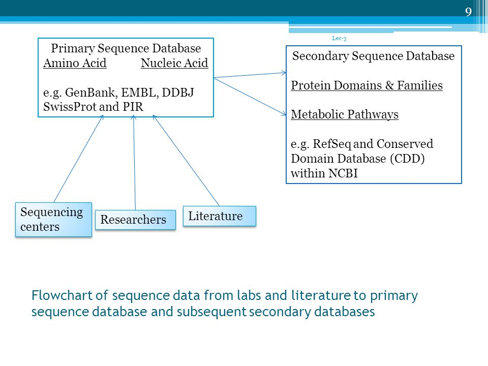 Flowchart of sequence data from labs and literature to primary sequence database and subsequent secondary databases Lec-3 9 Primary Sequence Database Amino AcidNucleic Acid e.g.