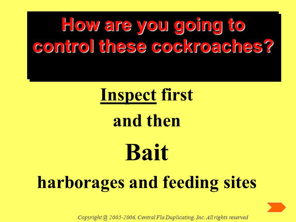 How are you going to control these cockroaches? Inspect first and then Bait harborages and feeding sites Copyright @ 2005-2006, Central Fla Duplicatin