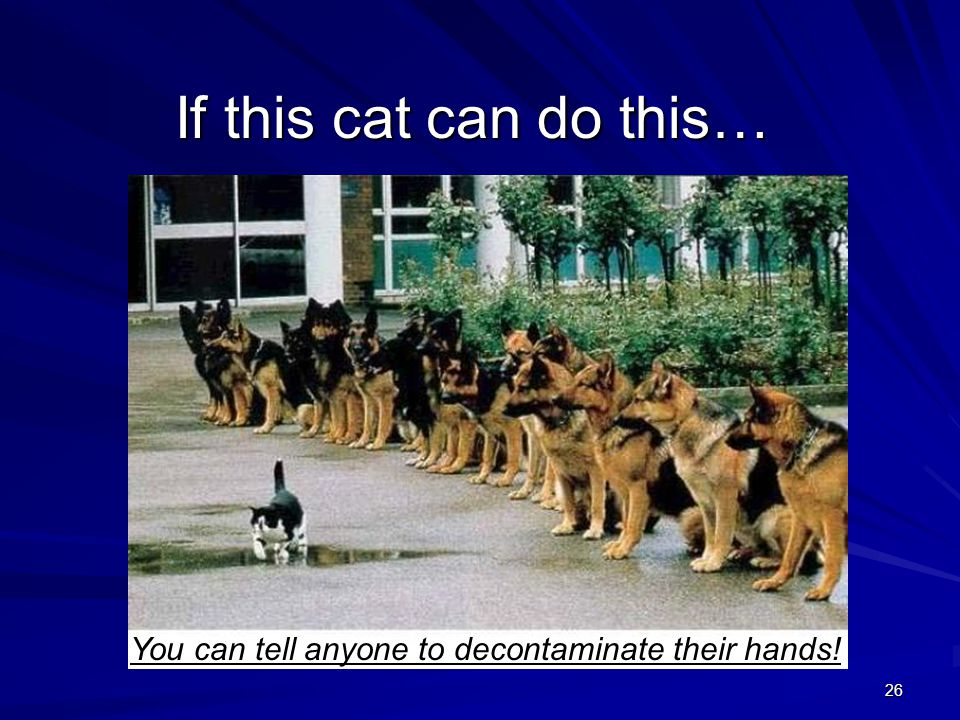 26 If this cat can do this… You can tell anyone to decontaminate their hands!