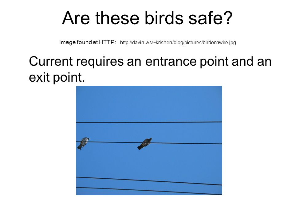 Are these birds safe.