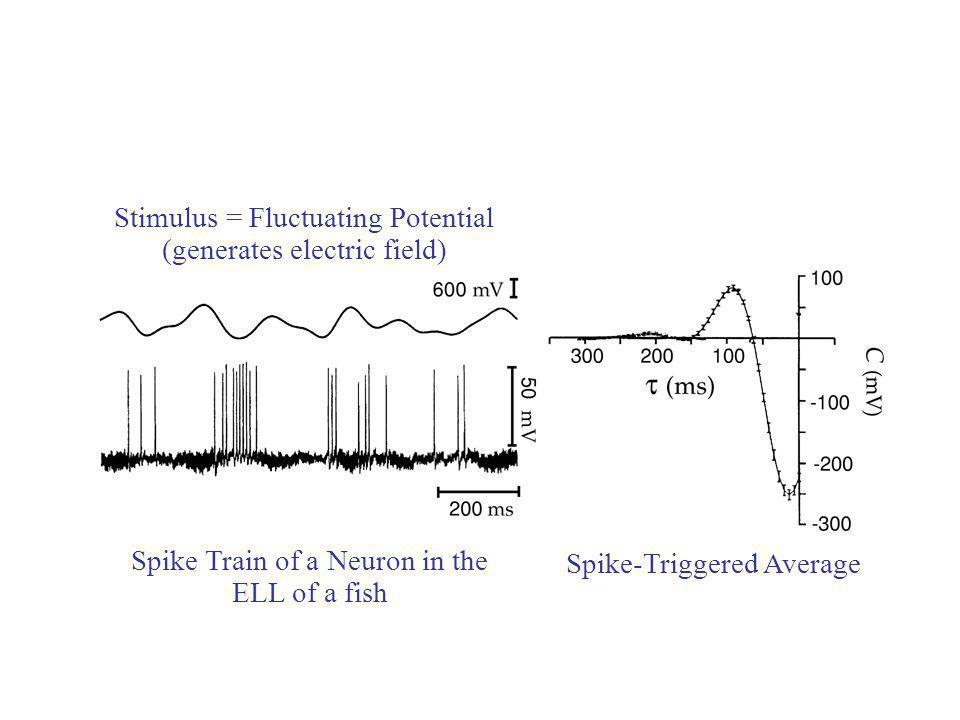 Stimulus = Fluctuating Potential (generates electric field) Spike Train of a Neuron in the ELL of a fish Spike-Triggered Average