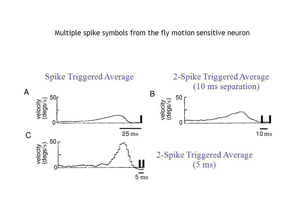 Spike Triggered Average 2-Spike Triggered Average (10 ms separation) 2-Spike Triggered Average (5 ms) Multiple spike symbols from the fly motion sensi