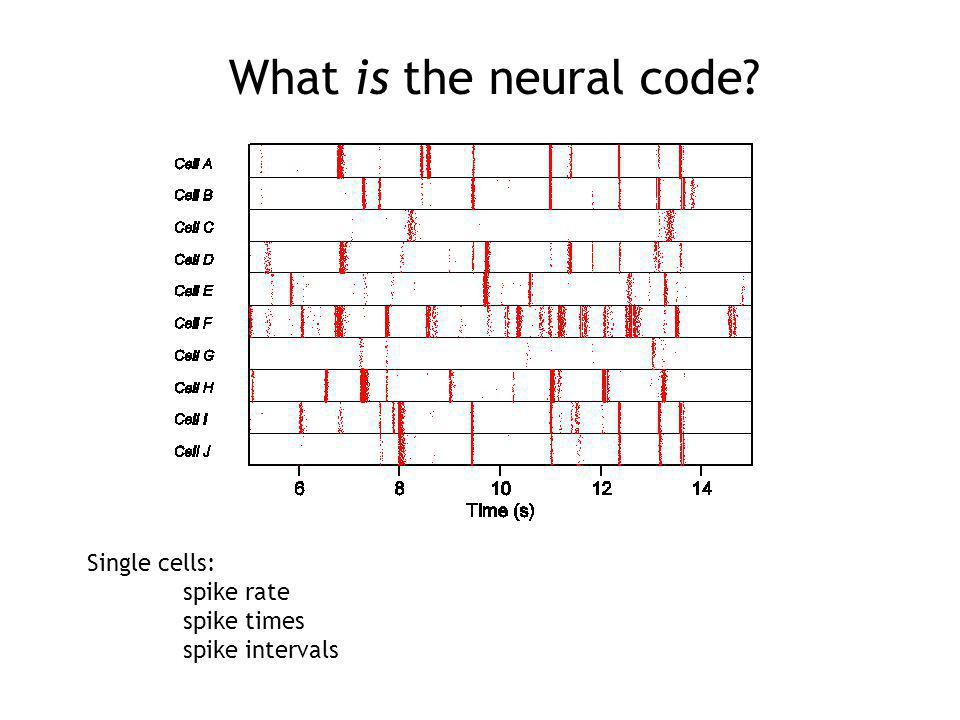 What is the neural code? Single cells: spike rate spike times spike intervals