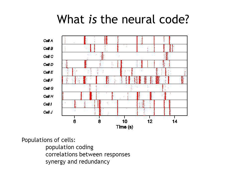 What is the neural code.