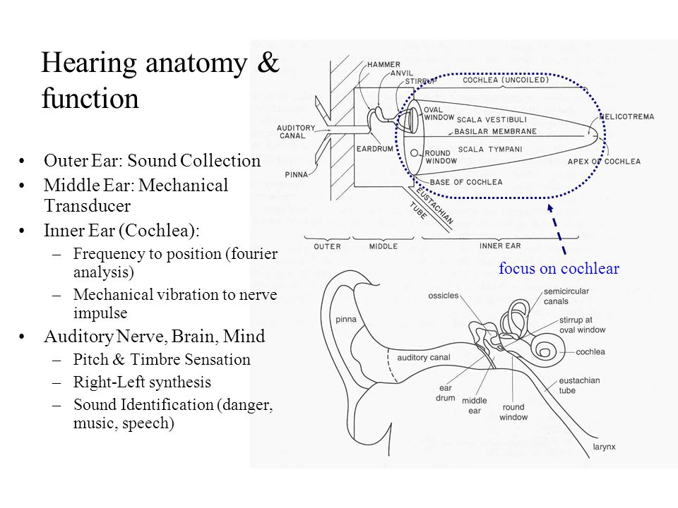 Summary - Pitch and Virtual Pitch Perception Most instruments produce harmonically related partials or harmonics.