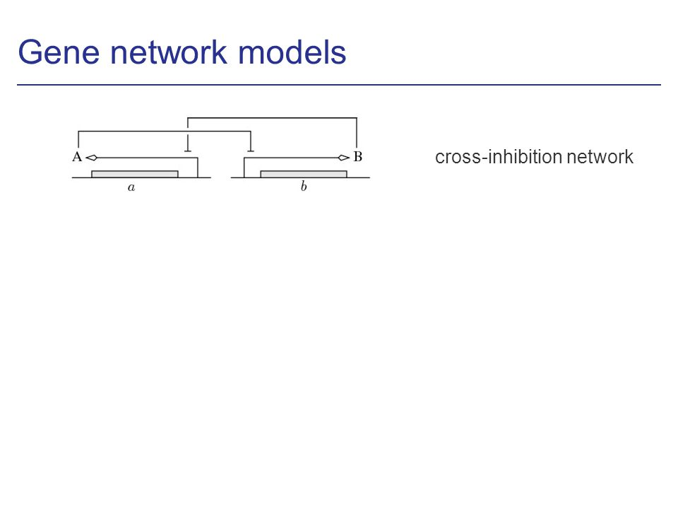 Gene network models cross-inhibition network