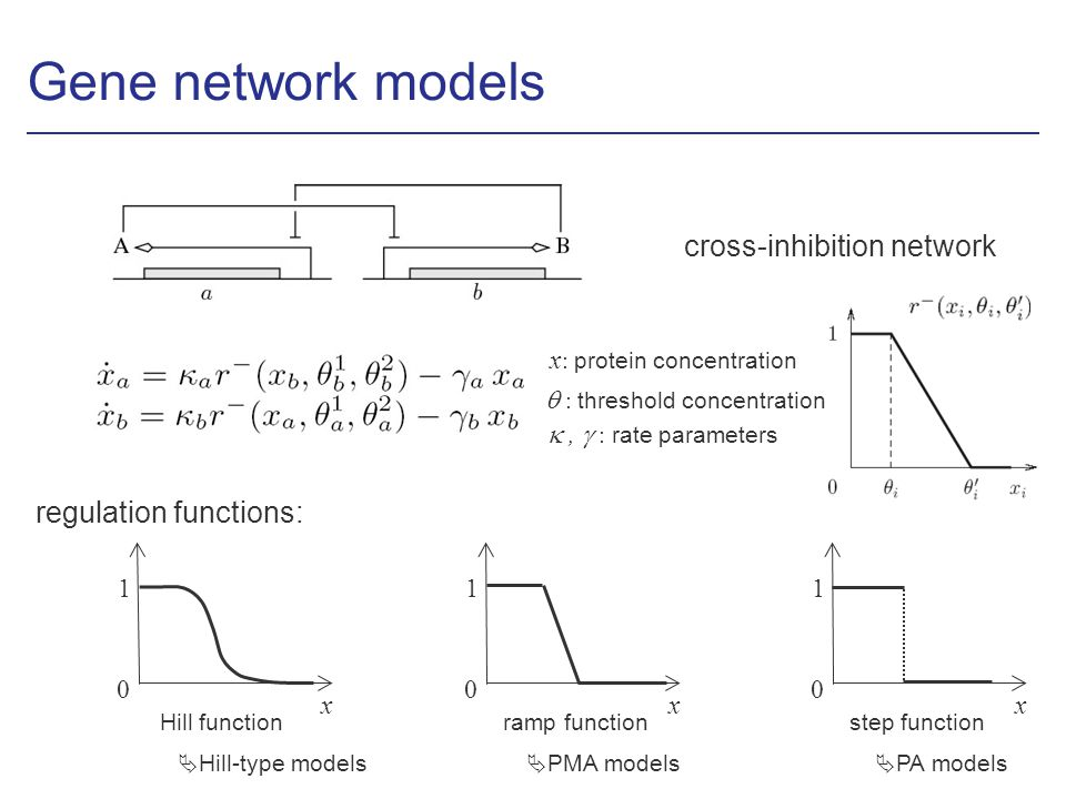 Gene network models cross-inhibition network x : protein concentration, : rate parameters : threshold concentration x 0 1 Hill function x 0 1 step function x 0 1 ramp function Hill-type models PMA models PA models regulation functions: