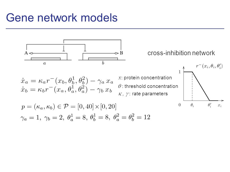 Gene network models cross-inhibition network x : protein concentration, : rate parameters : threshold concentration