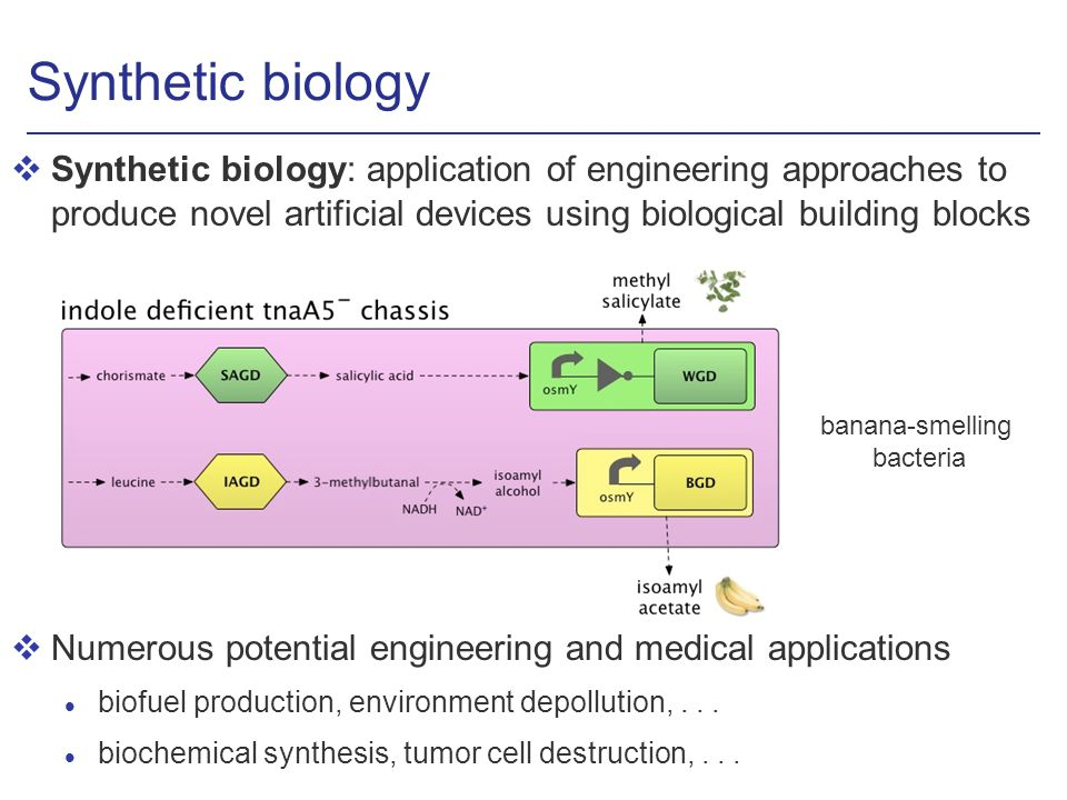 Synthetic biology vSynthetic biology: application of engineering approaches to produce novel artificial devices using biological building blocks vNume