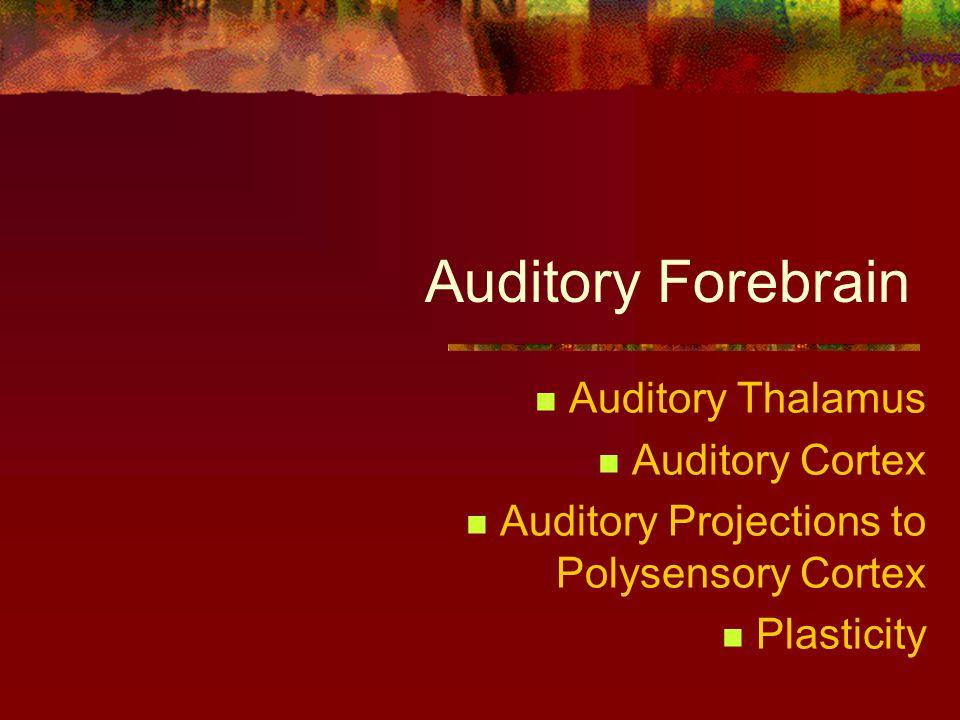 Auditory Forebrain Auditory Thalamus Auditory Cortex Auditory Projections to Polysensory Cortex Plasticity
