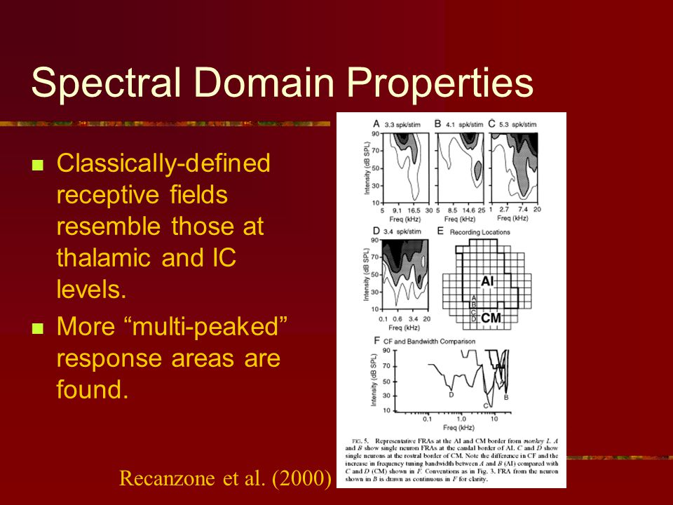 Spectral Domain Properties Classically-defined receptive fields resemble those at thalamic and IC levels.